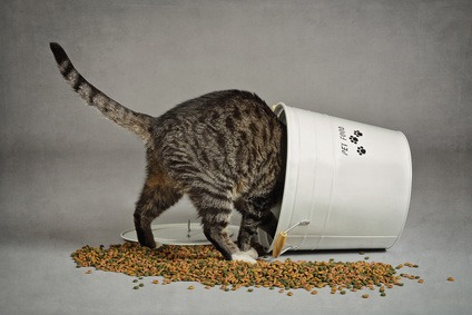 crocchette per gatti