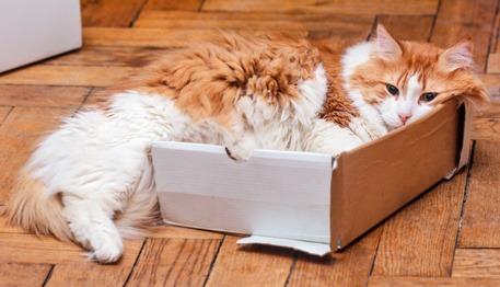 giochi per gatti fai da te