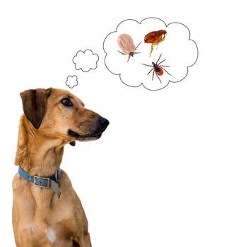 zecca parassita del cane