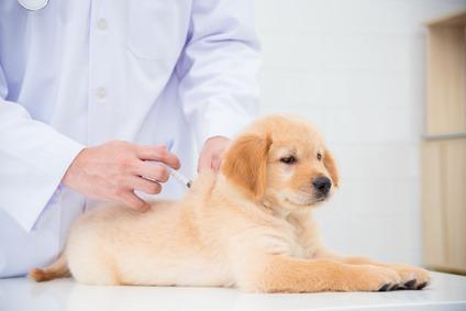 quante vaccinazioni deve fare un cane