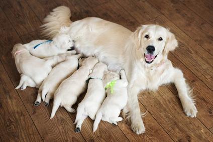 vaccini cuccioli cane