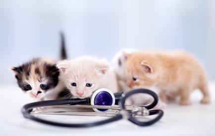 vaccini gatti obbligatori costi