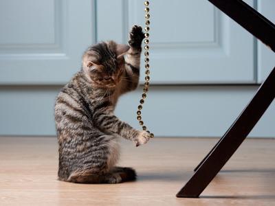 """Guida Completa """"Come giocare con il Gatto"""""""