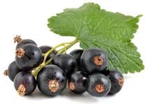 cibo umido per cani naturale Senior Manzo e Ribes nero Dalla Grana