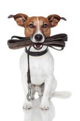I segnali calmanti, il cane obbediente