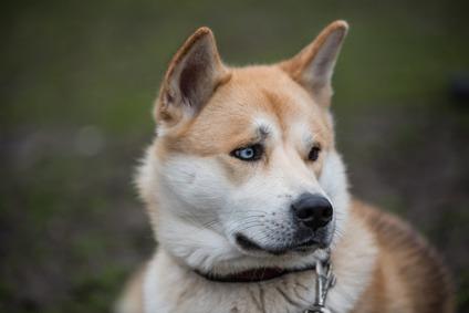 Le cause dei problemi renali del cane