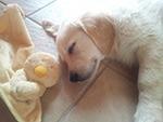 cane solo in casa