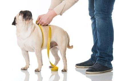 L'apparato digerente del cane e il tratto mancante