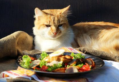 Cibo per gatti alimentazione del gatto - Cucina casalinga per gatti ...