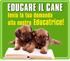 come educare un cane - scrivi alla nostra educatrice