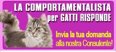 comportamentalista per gatti online