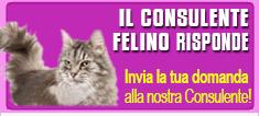 Consulente felino