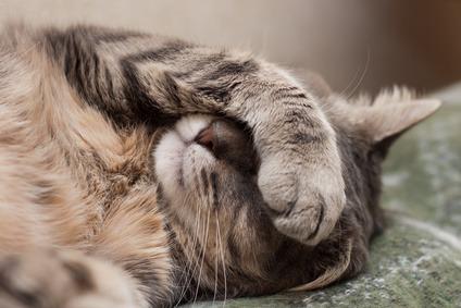 gatto insufficienza renale aspettativa di vita