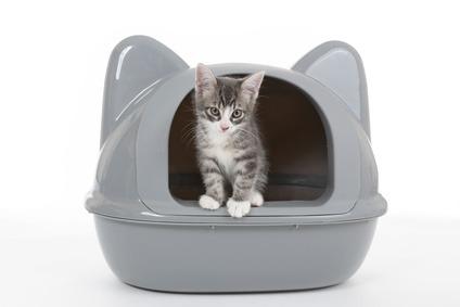 sintomi struvite gatto