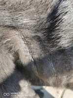 Dermatite o pellagra per un cane? Come riconoscerla?