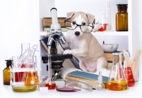I conservanti naturali o chimici utilizzati nei mangimi di cani e gatti