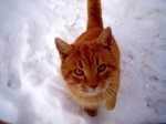 Alimentazione gatto 8 anni sterilizzato