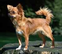 Il Microchip del cane può essere doloroso?