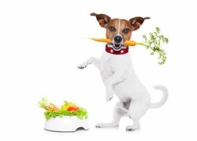 Quale frutta e verdura si può dare al cane
