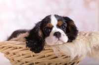 La nascita dei cagnolini, crescita e svezzamento