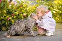 Parto difficile per una gatta randagia