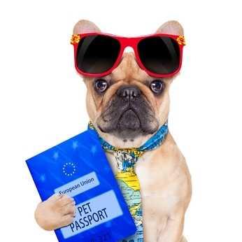 Passaporto e documenti per vacanze in Europa con il cane – Il passaporto europeo