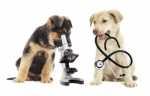 Antiparassitario per cani da che età usarlo? Esempio pratico