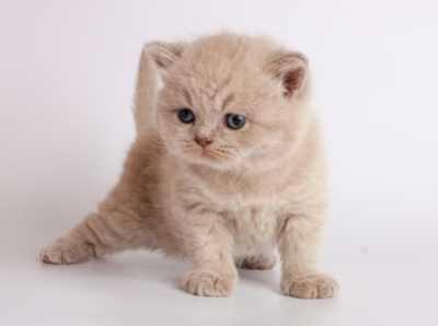 Capire il linguaggio ed il comportamento del gatto