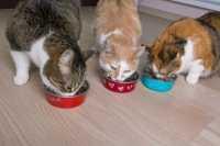 Prebiotici ed attenzione alla digeribilità per le crocchette gatto Prolife