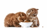 Pregi e difetti degli alimenti secchi per gatti Grain Free cioè senza cereali