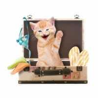 Viaggiare e vacanze In Auto, Treno, Aereo O Nave Con Il Gatto
