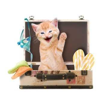 Viaggiare in auto, treno, aereo o nave con il gatto