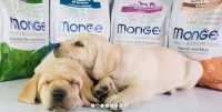 Crocchette per cani Monge Superpremium, ingredienti e lavorazione tutta italiana