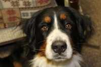 Crocchette Wildfield l'alimentazione che rispetta la natura carnivora del cane