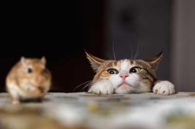 Perchè scegliere alimenti Grain Free per un carnivoro stretto come il gatto