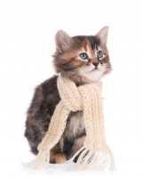 Le principali malattie che possono colpire il gatto