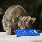 Passaporto e documenti per vacanze in Europa con il gatto – Il passaporto europeo