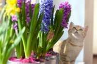 Alimenti per gatti con ingredienti biologici