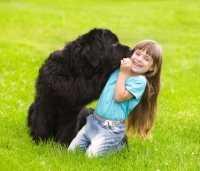 Le migliori razze di cani adatte a convivere con i bambini