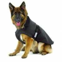 Abbigliamento per cani, consigli e suggerimenti. L'abbigliamento di Pet Shop Store