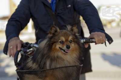 Cibi vietati ai cani