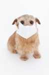 Come fare se l'antiparassitario causa prurito al cane?