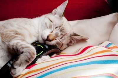 Le unghie del gatto ed il difficile rapporto con poltrone e divani