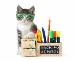 Capire il linguaggio del Gatto e comunicare con lui