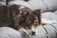 Cane che vomita dopo i pasti