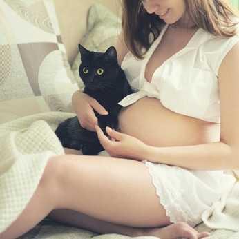 Toxoplasmosi, gatto e gestanti un esempio pratico