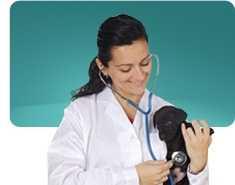 Crisi epilettiche di un cane
