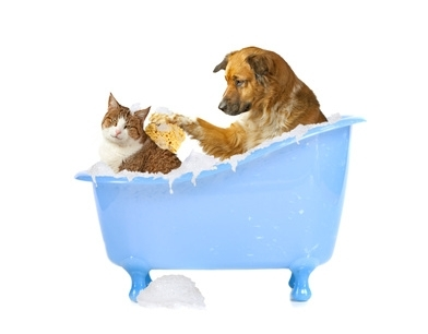 L'igiene del gatto, cosa fa lui, come lo possiamo aiutare noi