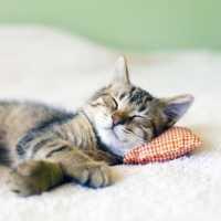 Come monitorare cuore e respiro in un gatto