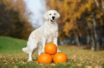 Le proprietà della zucca e del grain free nell'alimentazione del cane